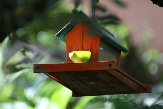 Simply Delightful - Wild Bird Store
