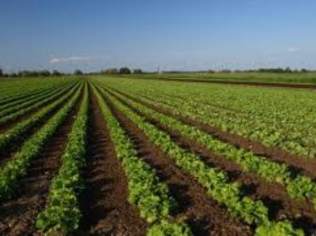 Agricultural Distribution Company For Sale