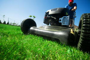Lawn Maintenance For Sale