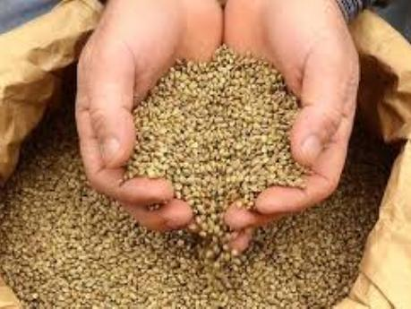 Agricultural Seed Processing Plant For Sale