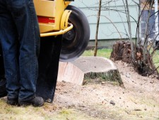 Tree and Stump Removal Business in Calgary