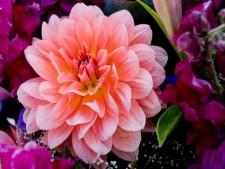 Wholesale Florist - Houston