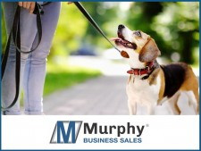 Successful Dog Walking Services Business