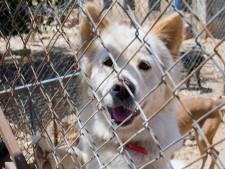 Pet Boarding & Kennel Service