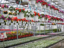 Popular Greenhouse & Garden Center for Sale