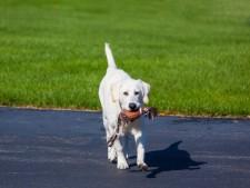 Long-Est. Boise Area Pet Boarding With Real Estate