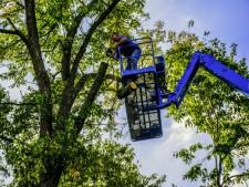 Tampa Bay Tree Service