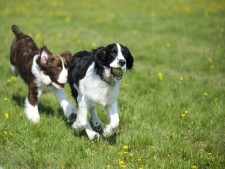 Profitable Pet-Related Business in Idaho